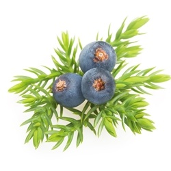 Juniper Berry France