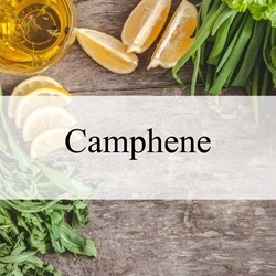 Camphene (Natural)***