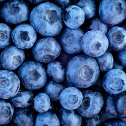 Blueberry Terpene Flavor**